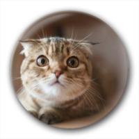超萌的猫主子-创意镜子钥匙扣