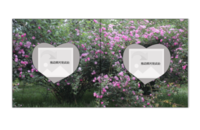 春暖花开-贝蒂斯6x6照片书