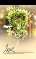 美丽故事2-全景明信片(竖款)套装