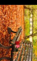 秋-全景明信片(竖款)套装