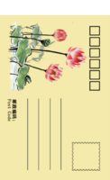 荷-全景明信片(竖款)套装