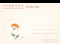 清新文艺 小清新淡雅唯美花朵-长方留白明信片(横款)套装
