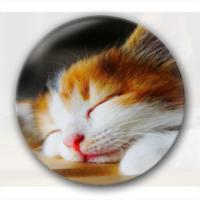 盛世美颜的猫主子  礼物-创意镜子钥匙扣
