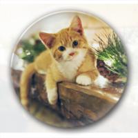 超萌的猫主子  装饰礼物-4.4个性徽章