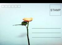 墨枚-正方留白明信片(横款)套装