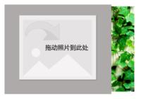 绿色植物墙-小清新-文艺-彩边拍立得横款(6张P)