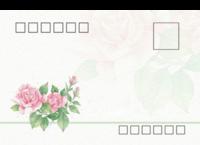 玫瑰情-等边留白明信片(横款)套装