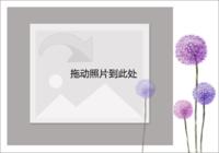 紫色薰衣草-彩边拍立得横款(6张P)