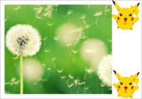 唯美大自然——皮卡丘系列-彩边拍立得横款(6张P)