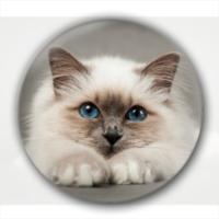 蓝眼睛的猫主子  装饰礼物-创意镜子钥匙扣